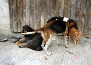 0_RouXy_et_3_chiens