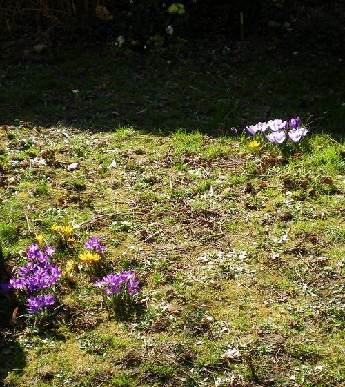 031714_garden (1)