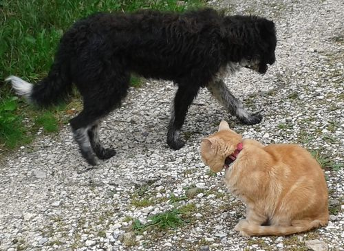 052614_chats_chien (1)