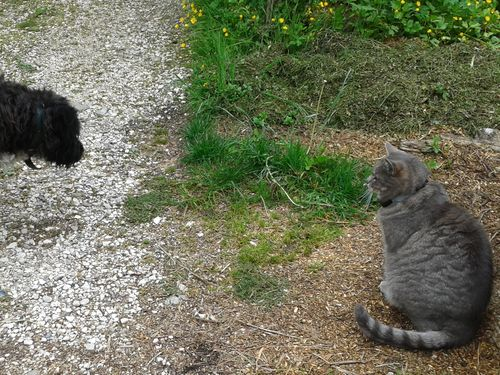 052614_chats_chien (2)