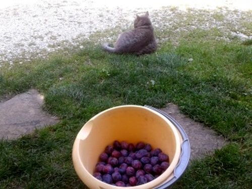 080814_prunes