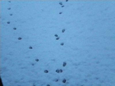 011715_neige (1)
