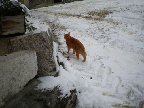 012015_neige (5)