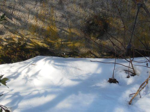 022515_snowdrop (2)