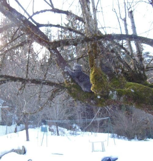 022515_snowdrop (3)