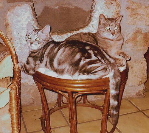Tigri-Frimousse2