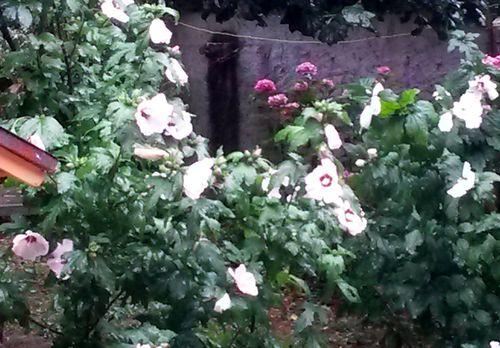 081015_jardin (4)