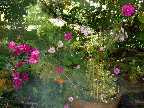 090915_RF_fleursd (3)