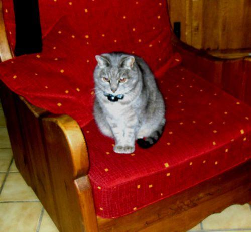 101515_fauteuil