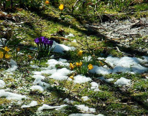 031016_neige_fond (1)