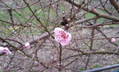 040316_fleurs (3)