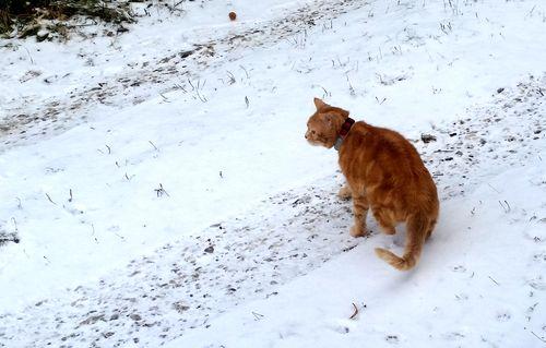 010517_dans_la_neige-1