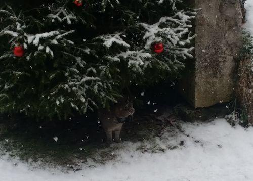 011117_snow-1