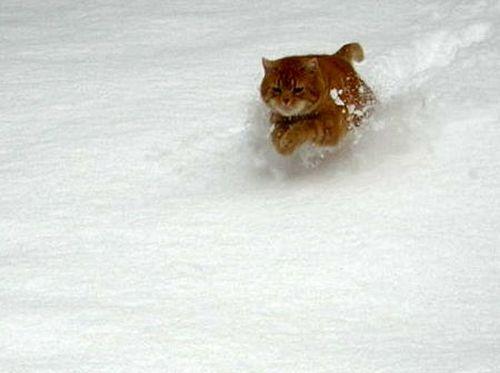 0_rouxy_neige